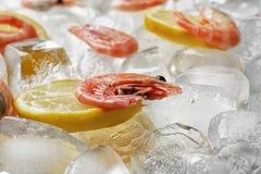 Fresh shrimps and lemon slices. On ice cubes royalty free stock photo