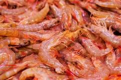 Fresh shrimps in market Stock Photography
