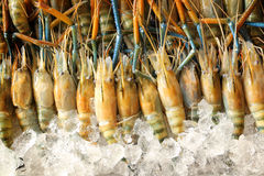 Fresh shrimps in market Stock Photography