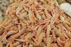 Fresh shrimps Stock Photo