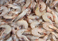Fresh shrimps on a market Stock Photography