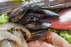 Fresh shrimps, mussels and fish. Closeup Royalty Free Stock Image