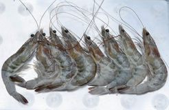 Fresh shrimps on plate Royalty Free Stock Photography
