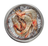 Fresh shrimps in a plate with ice. Stock Images