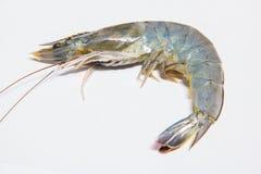 Fresh shrimps,prawns isolated. On white background Stock Image