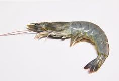 Fresh shrimps,prawns isolated. On white background Stock Photo