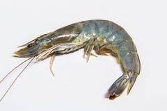 Fresh shrimps,prawns isolated. On white background Stock Photos