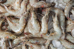 Fresh shrimps or prawns  in seafood market. Selective focus on close up of fresh prawn, fresh shrimp are  components used to make seafood which sell in fish Royalty Free Stock Images