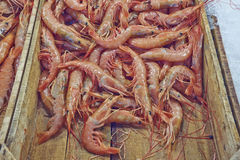 Fresh shrimps for sale Stock Images