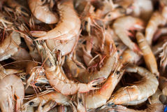 Fresh shrimps for sale at the sea market Royalty Free Stock Image
