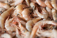 Fresh shrimps for sale at the sea market Royalty Free Stock Photo