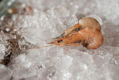 Fresh shrimps for sale at the sea market Stock Image