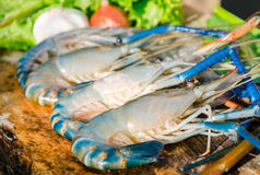 Fresh shrimps Stock Photos