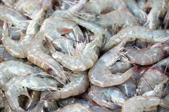 Fresh shrimps in seafood market. Stock Photos
