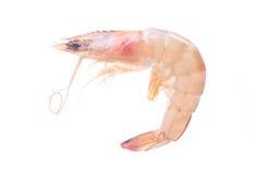 Fresh shrimps Stock Photos