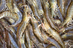 Fresh shrimps Royalty Free Stock Image
