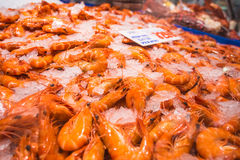 Fresh Shrimps Stock Photography
