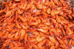 Fresh Shrimps Stock Images