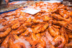 Fresh Shrimps Royalty Free Stock Photography