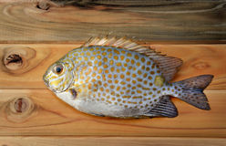 Fresh Siganus guttatus fish from market Royalty Free Stock Image