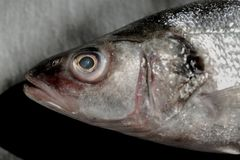 Fresh silver sea bass head on vintage black stone. Horizontal top view crop with text space Stock Image