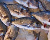 Fresh silver sea breams. For sale Stock Image
