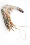 Fresh skin on tiger prawn Royalty Free Stock Photo