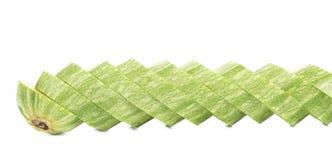 Fresh sliced marrow. Royalty Free Stock Photo