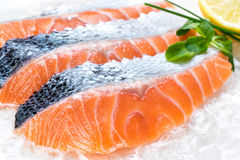 Fresh sliced salmon portions on ice. Royalty Free Stock Photography