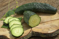 Fresh slices eco cucumbers Stock Photography