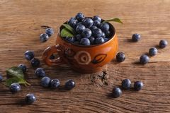 Sloes Stock Images