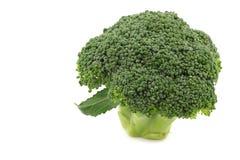 Fresh small broccoli Royalty Free Stock Photos