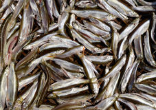 Fresh small fish background at a market. In China Royalty Free Stock Images