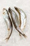 Fresh small fish Stock Image