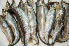 Fresh small fish at the market. Royalty Free Stock Photos
