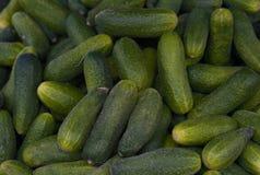Fresh, Small, Organic, Baby Gherkins stock photos
