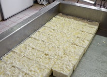 Fresh small soft cheeses, draining. Artisan product. Stock Photos