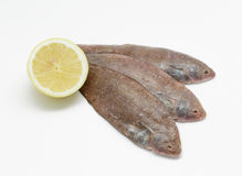 Fresh small sole fishes on white background Royalty Free Stock Images