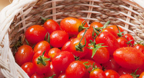 Fresh small tomato in basket Royalty Free Stock Photo