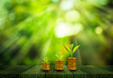 Fresh small tree growth on gold coins Royalty Free Stock Photo