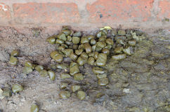 Fresh and smelly horse manure Royalty Free Stock Photography