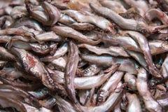 Fresh smelt, capelin or caplin fish. Selective focus. Close-up Stock Photos
