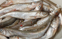 Fresh smelt for frying with spices. Small fish Royalty Free Stock Photo