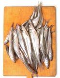 Fresh smelts fish Stock Image