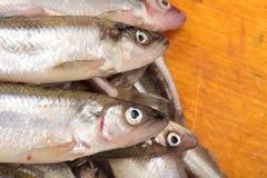 Fresh smelts fish Royalty Free Stock Photography