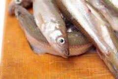 Fresh smelts fish Stock Photo