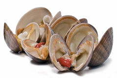 Fresh smooth clams to eat. Stock Photo