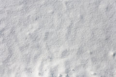 Fresh snow for backgrounds. The Fresh snow for backgrounds stock image