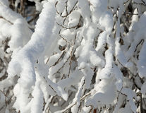 Fresh snow on branch Stock Images