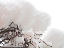 Fresh snow on catkin Stock Photos